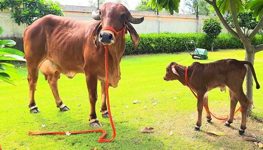 About-Ksheer-Dairy-Pvt-Ltd.jpg